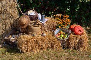 harvest 1642294 1280 300x200 - Sezon dożynkowy w pełni. Przedstawiamy kalendarz imprez