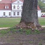 img 20200506 100730089 150x150 - Park w Żelazkowie nabiera nowego blasku