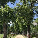 img 2804 150x150 - Rewitalizacja Parku w Żelazkowie
