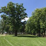 img 2808 150x150 - Rewitalizacja Parku w Żelazkowie